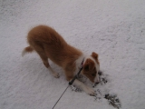 Fame 20.12 erster Schnee.jpg