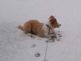 Fame 20.12 erster Schnee2.jpg