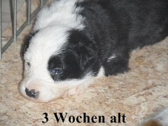 a_3_Wochen_007.jpg