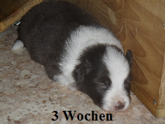 a_3_Wochen_009.jpg