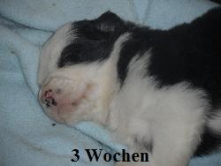 a_3_Wochen_020.jpg