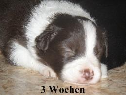 a_3_Wochen_032.jpg