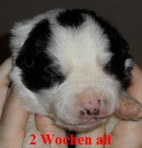 a_H_wurf_2_wochen_002.jpg