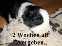 a_H_wurf_2_wochen_016.jpg