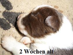 a_H_wurf_2_wochen_024.jpg