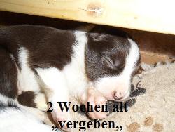 a_H_wurf_2_wochen_026.jpg