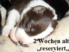 a_H_wurf_2_wochen_027.jpg