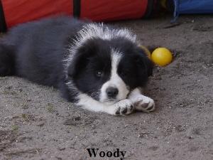 a_woody_059.jpg