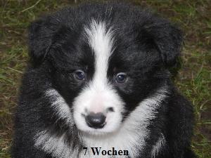 a_7_wochen_020.jpg
