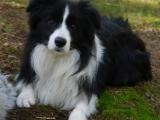 hunde 054
