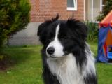 hunde 097